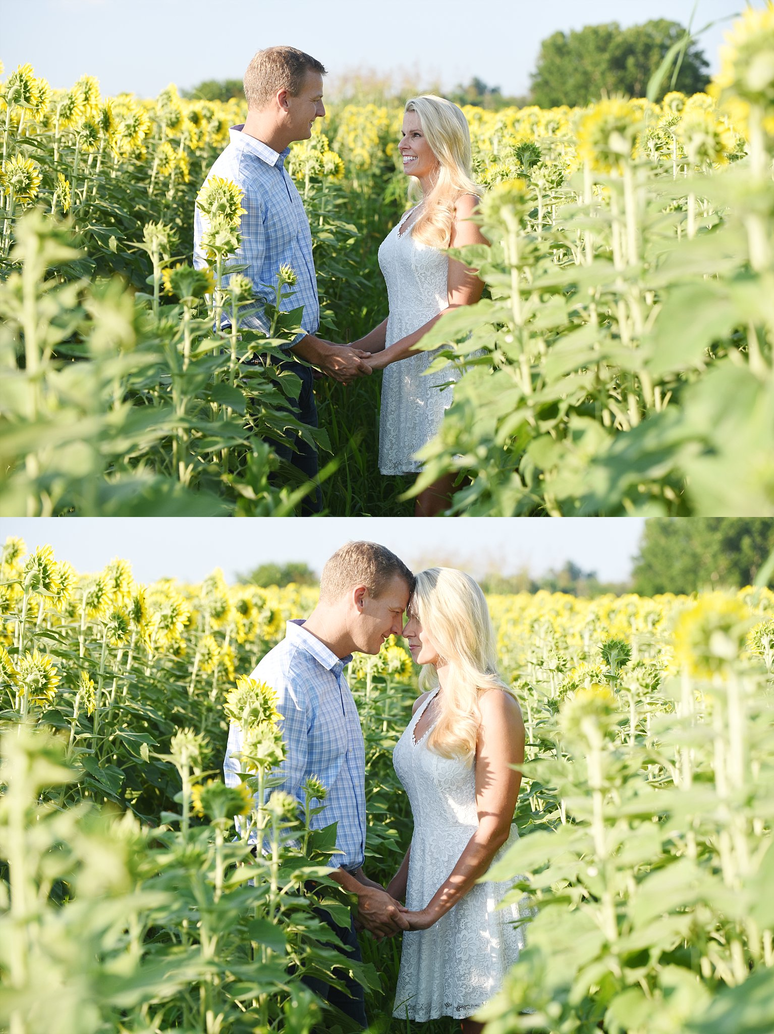 Sunflower-field-Photography-jenfolio_0127.jpg